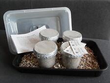 Magic Farm's Oyster COLTIVAZIONE DEI FUNGHI KIT - 4x Grow Vasi (grandi dimensioni)