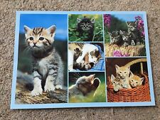 Ginger Grey Tabby Cats Kittens Print Photo Animal Nature Postcard Unposted NEW