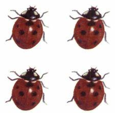 Red Black Ladybug Lady Bug Insect Select-A-Size Waterslide Ceramic Decals Bx