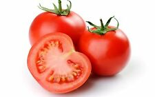 A 0.2g (approx.30) tomato seeds FLORADADE multipurpose popular American variety
