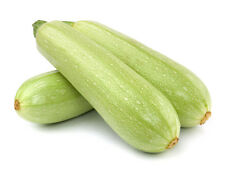 Squash Zucchini seeds Gribovsky Heirloom Vegetable Seed