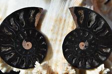 RARE 1 in 100 BLACK Ammonite FOSSIL PAIR 28gram Deep Crystals MEDIUM 47mm n2701
