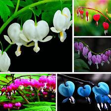 10/50/100pc Perennial Spectabilis Herb Dicentra Plant Bleeding Heart Flower Seed