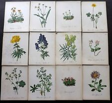 Seboth & Graf 1884 Lot of 31 Antique Botanical Prints. Book Plates