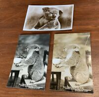 Lot of 3 Vintage RPPC of Koala Native Bears Australia