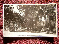 BOTANICAL  GARDENS,  ROCKHAMPTON  QUEENSLAND  MURRAY SERIES  No. 49  POSTCARD