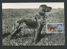 SAN MARINO MK 1956 HUNDE DOGS IRISH SETTER CARTE MAXIMUM CARD MC CM d7671