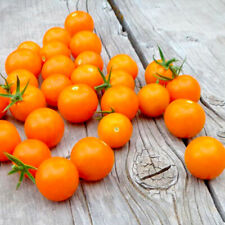 30 BIG SUNGOLD SELECT TOMATO SEEDS 2020 (all non-gmo heirloom vegetable seeds!)