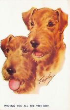 Vtg Postcard Irish Terrier Dogs Taylor Artist Bamforth Comics B50