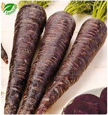 Zanahoria Morada muy dulce  (1.000 semillas seeds) Purpura