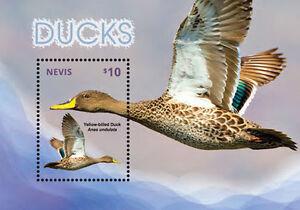 Nevis-2014-Birds-Ducks