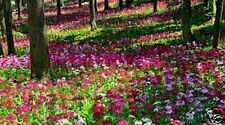 7500 FLOWER SEEDS cottage garden shake & grow mix seed pack wild bee scent bulk