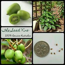 10+ ORGANIC KIWIBERRY SEEDS (Actinidia arguta) Edible Fruit Sweet Kiwi Garden