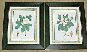 "2 Framed Prints~Magnolia Ashei & Magnolia Sinensis~Plastic covers~12""x10""x3/4"""