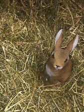 Heu 15kg Wiesenheu 1.Schnitt Futter für Kaninchen, Hasen und Meerschweinchen