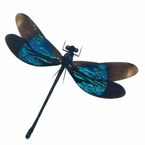 Turquoise Damselfly (Euphaea refulgens) (M) Specimen Indonesia Dragonfly Insect