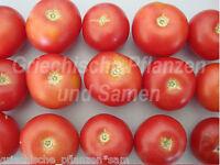 🔥 🍅 Burbank Slicing Tomate alte Tomaten Sorte 10 frische Samen Balkon Kübel