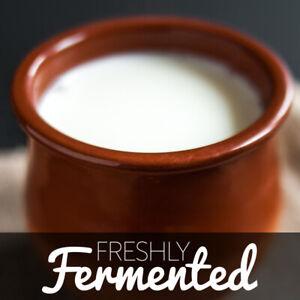 Organic Certified Matsoni / Caspian Sea yoghurt Culture (UKAS Lab Tested)