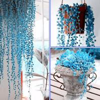 50Pcs Rare Blue Pearl Chlorophytum Seeds Potted Plant Seed Anti Radiation Fashio