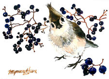 ACEO Limited Edition - With Blueberries, Bird art, Small gift idea