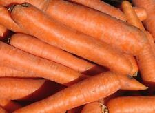 5g (approx. 4500) carrot seeds KORAL late, very sweet, do not accumulate nitrate