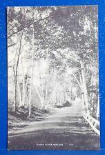Older Photo Postcard/MAINE SILVER BIRCHES