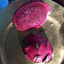30 Purple Dragon Fruit Seeds Edible Fruiting Cactus