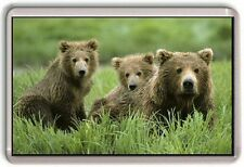 Baby Grizzly Bears 02 Fridge Magnet Cute