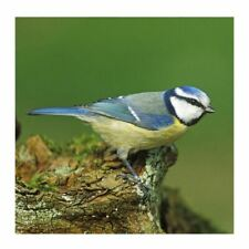 Blue Tit Sound Card - plays beautiful birdsong when opened!