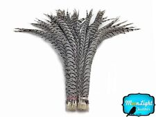 """Pheasant Feathers 5 Pieces 30-35"""" Zebra Black and White Lady Amherst Pheasant"""