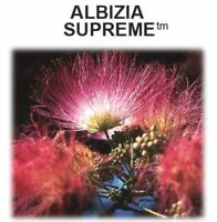 Albizia Supreme by Supreme Nutrition Products - 460mg / Capsule - 90 Caps