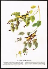 1930s Original Vintage Audubon Carbonated Warbler Bird Limited Ed Art Print