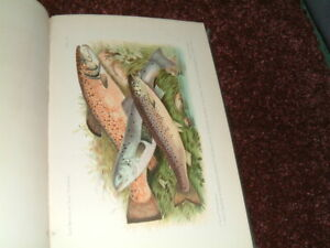 British & Irish Salmonidae Francis Day.1st edition fishing angling trout no carp