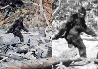 Sasquatch DVDs before Finding Bigfoot Original Vintage 1970s Documentary DVD Set