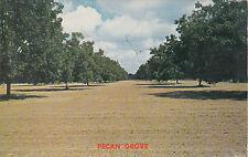 "*Postcard-""Pecan Grove"" ...Trees & Trees of Pecans!-  (#192)"