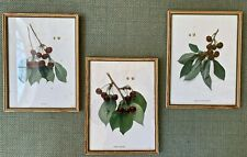 3 Antique Framed Botanical Lithograph Bookplate Prints