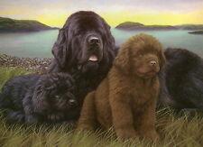 More details for nigel hemming newfoundlands newf newfies working dogs art litter puppies pups