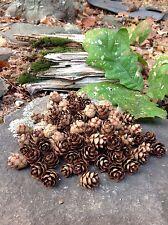 Pine Cone Miniature Craft School  Natural Tree Lot Potpourri Mini Art 100 Count