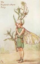 Flower Fairies: The Shepherds Purse Fairy Vintage Print c1930 Cicely Mary Barker
