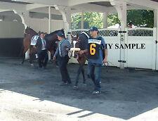 STEPHANIE'S KITTEN 8 by 10 PHOTO 2014 Horse Race BELMONT PARK Breeders Cup #3