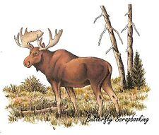 Wildlife Moose Tree Scene Cling Unmounted Rubber Stamp C.C. Designs JD1046 New