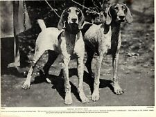 1930s Antique German Shorthaired Pointer Dog Print German Hunting Dogs 3856L