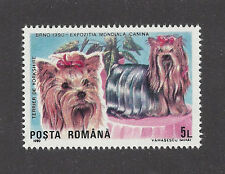 Dog Art Head & Body Portrait Postage Stamp YORKSHIRE TERRIER Romania 1990 MNH