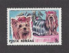 Dog Art Head & Body Portrait Postage Stamp YORKSHIRE TERRIER Romania 1990 MNH