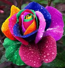 200 X Multi- Colours Rare Rainbow Rose Flower seeds Home Garden Rainbow Flower