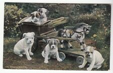 [53925] OLD POSTCARD FIVE PUPPIES & A PONY CARRIAGE TUCK & SONS' PRETTY PUPPIES