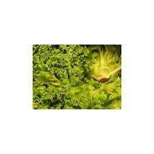 Lettuce Waldmans Green Great Heirloom Vegetable By Seed Kingdom 2,000 Seeds