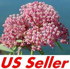 75 Pcs Seeds of Red & Pink Milkweed Flowers G49, Garden Perennial Flowers