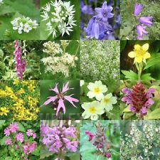 WILDFLOWER WOODLAND or SHADE SEED MIX INC GRASS 8 grams - bluebell, primrose etc