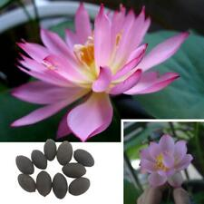 10Pc Lotus Flower Seeds Rare 6 Kind Water Plant Bonsai Hydroponic Garden Seeds
